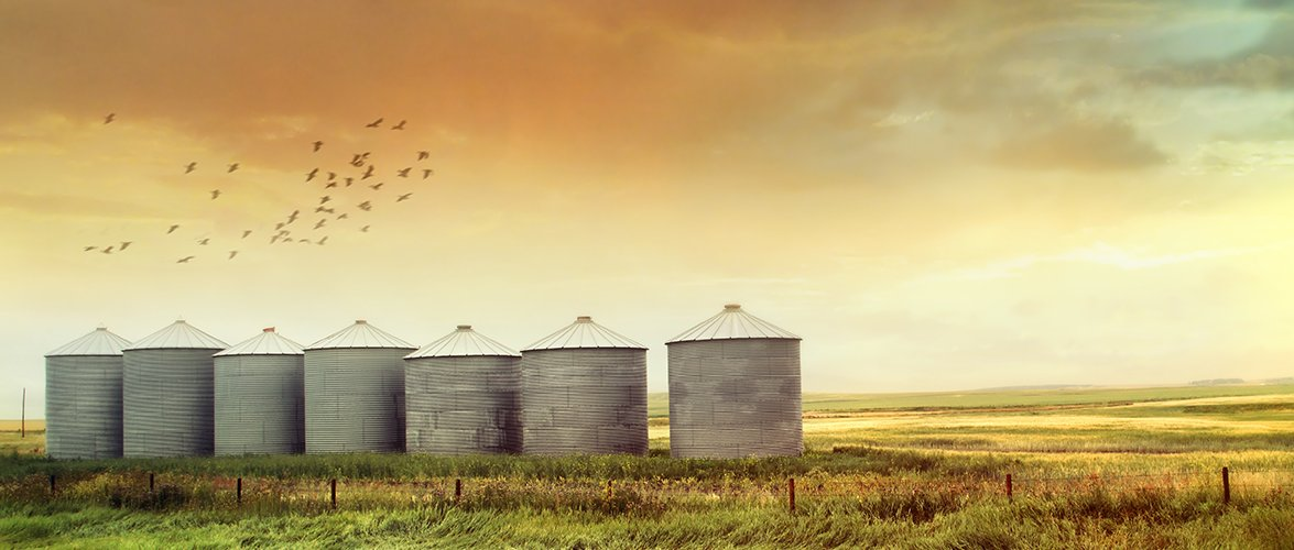 Seven large metal silos with pointed white roofs lined beside each other in an open crop field with birds flying overhead.