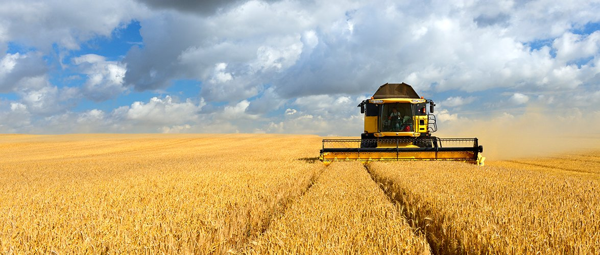 Large yellow crop-harvesting machine cutting through a flat open wheat field.